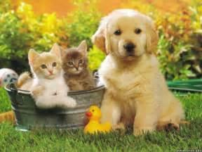 We Accept Pets